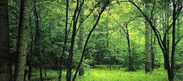 infiniti-forest-air